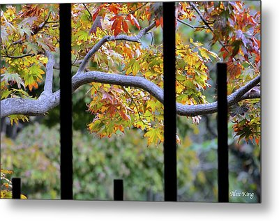 Looking In The Japanese Garden Metal Print by Alex King
