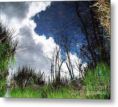 Metal Print featuring the photograph Looking Into The Bog by Joy Nichols