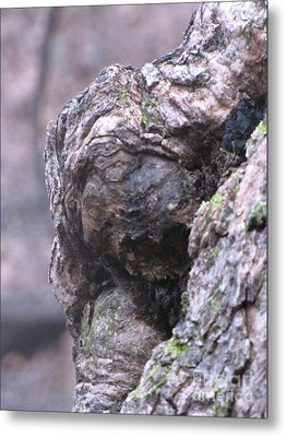 Metal Print featuring the photograph Looking by Melissa Stoudt