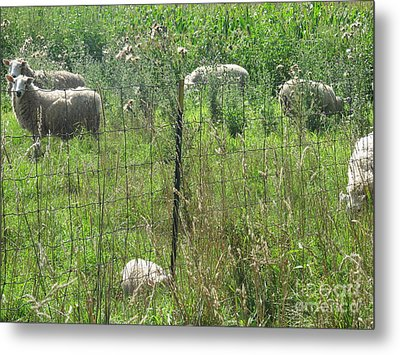 Metal Print featuring the photograph Looking My Way by Tina M Wenger