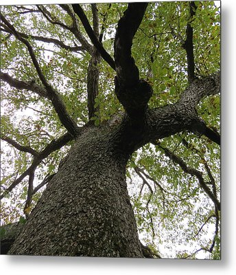 Metal Print featuring the photograph Looking Up A Tree by Eric Switzer