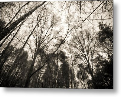 Looking Up At Trees Metal Print by J Riley Johnson