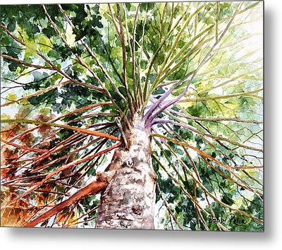 Looking Up Metal Print by Bobbi Price