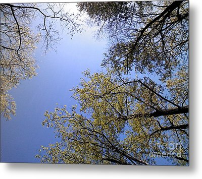 Metal Print featuring the digital art Looking Up By Angela Clay by Angelia Hodges Clay