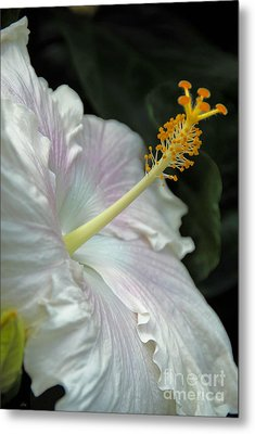 Looking Up Metal Print by Cindy Manero