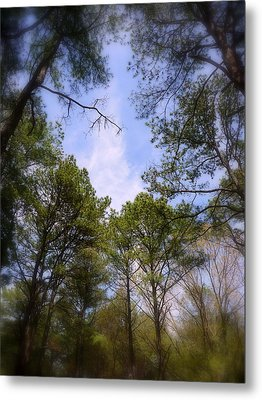 Metal Print featuring the photograph Looking Up by Jim Whalen