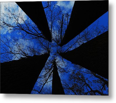 Looking Up Metal Print by Raymond Salani III