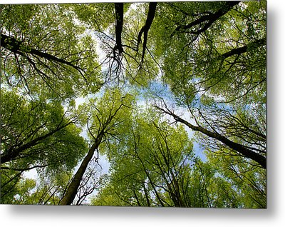 Looking Up Metal Print by Ron Harpham