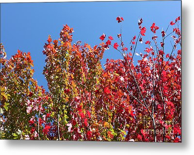 Metal Print featuring the photograph Looking Upward by Debbie Hart