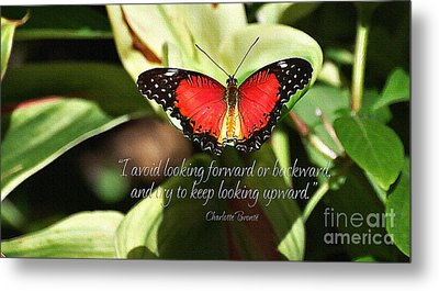 Looking Upward Metal Print by Diane E Berry