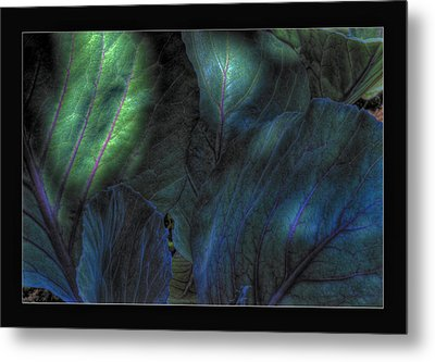 Looming Cabbage Metal Print by Zorn Matson