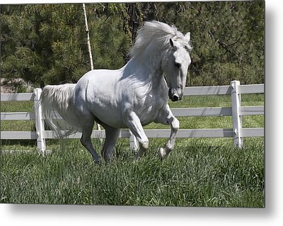 Loose In The Paddock Metal Print by Wes and Dotty Weber