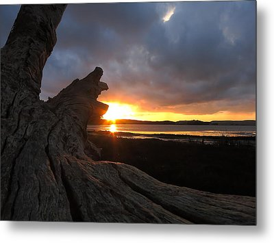 Los Osos Driftwood Metal Print by Paul Foutz
