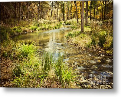 Lost Creek In Autumn Morning Metal Print by Iris Greenwell