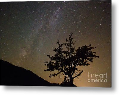 Lost In The Night Metal Print by James BO  Insogna