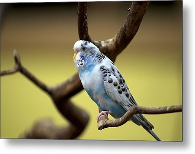 Lost In Thought Metal Print by Robert Martin