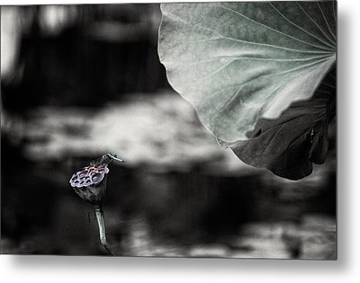 Lotus And Dragonfly 2 Metal Print