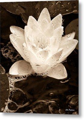 Lotus Blossom Metal Print by John Pagliuca