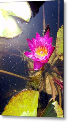 Lotus Day Metal Print