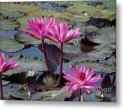 Metal Print featuring the photograph Lotus Flower by Sergey Lukashin