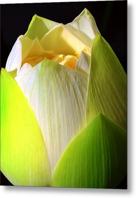 Lotus Metal Print by Kara  Stewart