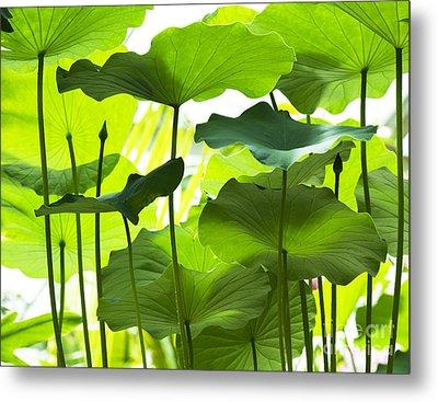 Lotus Leaves Metal Print by Tim Gainey