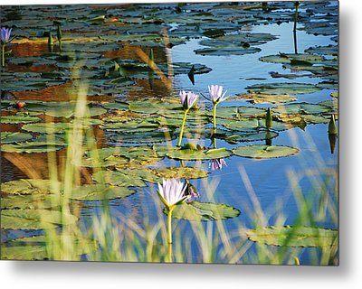Metal Print featuring the photograph Lotus-lily Pond 2 by Ankya Klay