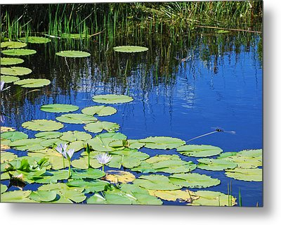 Metal Print featuring the photograph Lotus-lily Pond by Ankya Klay