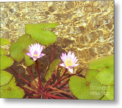 Metal Print featuring the photograph Lotus by Mini Arora