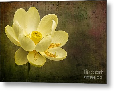 Metal Print featuring the photograph Lotus Notes by Vicki DeVico