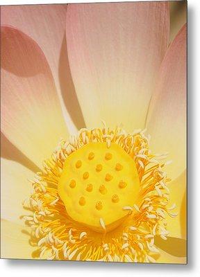 Lotus Number One Metal Print by Catherine Lau