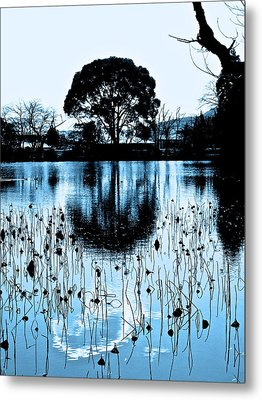 Lotus Pond Winter - 4 Metal Print by Larry Knipfing