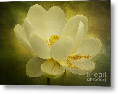 Metal Print featuring the photograph Lotus by Vicki DeVico