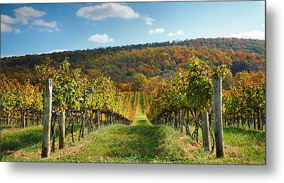 Loudon County Vineyard I Metal Print by Steven Ainsworth