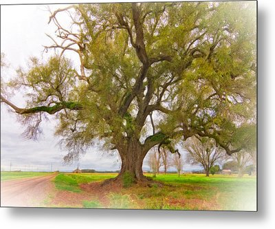 Louisiana Dreamin' Metal Print by Steve Harrington