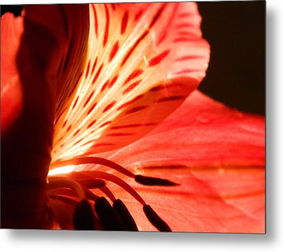 Love Is In Bloom Metal Print by Tara Miller