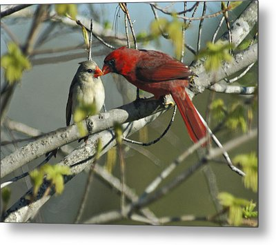 Love Is In The Air Metal Print by Judy  Johnson