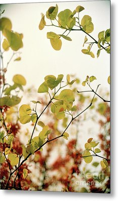 Metal Print featuring the photograph Love Leaf by Rebecca Harman