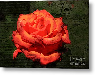 Metal Print featuring the photograph Love N Rose by Mindy Bench