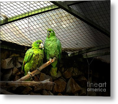 Love Parrots Metal Print by Al Bourassa