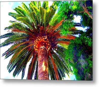 Metal Print featuring the photograph Love Under The Palm In San Diego by Angela Annas