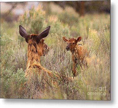 Metal Print featuring the photograph Love You Mama by Clare VanderVeen