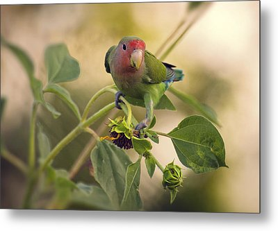 Lovebird On  Sunflower Branch  Metal Print by Saija  Lehtonen