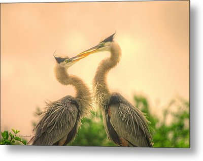 Metal Print featuring the photograph Lovebirds  by Dennis Baswell