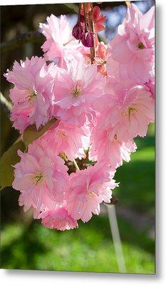 Lovely Cherry Blossom Metal Print by Iryna Soltyska