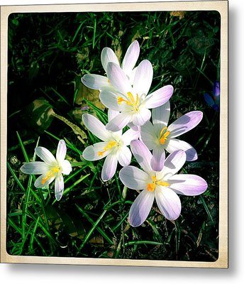 Lovely Flowers In Spring Metal Print by Matthias Hauser