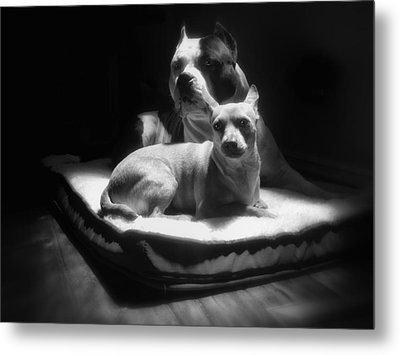 Loving Friends 1 Metal Print by Larry Marshall