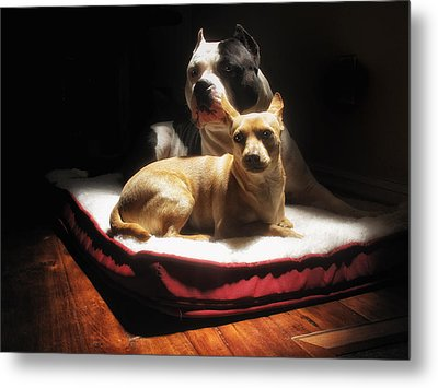 Loving Friends Color Metal Print by Larry Marshall