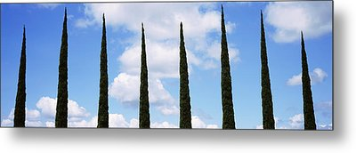 Low Angle View Of Leafless Palm Tree Metal Print