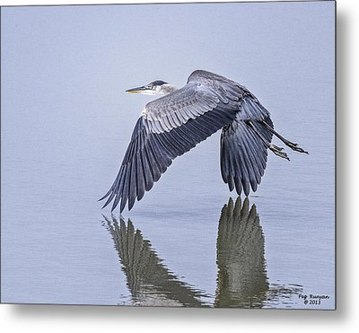 Low Flying Heron Metal Print